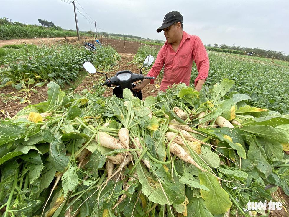 Bán không ai mua, nông dân chở cả ôtô rau đổ xuống sông Hồng - Ảnh 3.