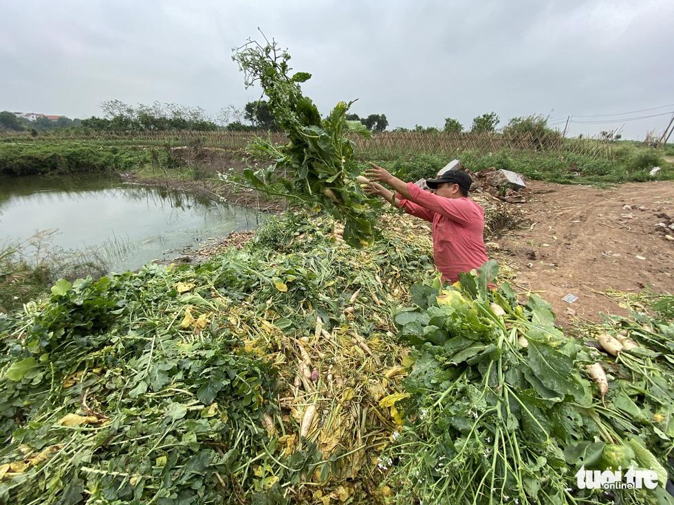 Bán không ai mua, nông dân chở cả ôtô rau đổ xuống sông Hồng - Ảnh 4.