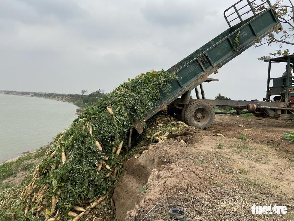 Bán không ai mua, nông dân chở cả ôtô rau đổ xuống sông Hồng - Ảnh 6.