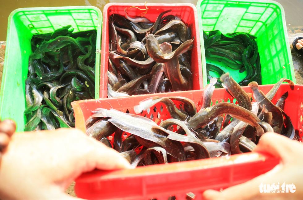 Lo cá phóng sinh 'chầu trời', người dân ra giữa sông Sài Gòn thả - Ảnh 7.