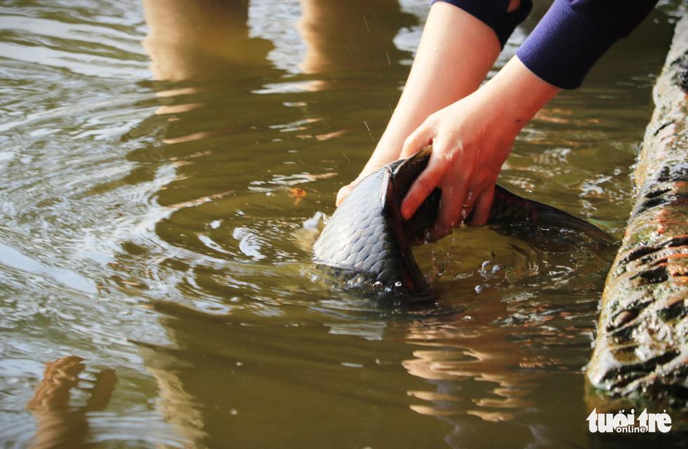 Lo cá phóng sinh 'chầu trời', người dân ra giữa sông Sài Gòn thả - Ảnh 8.