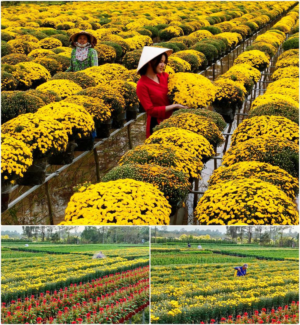 Vườn hoa Sa Đéc tết năm COVID thứ hai qua ống kính OPPO Reno5 - Ảnh 15.