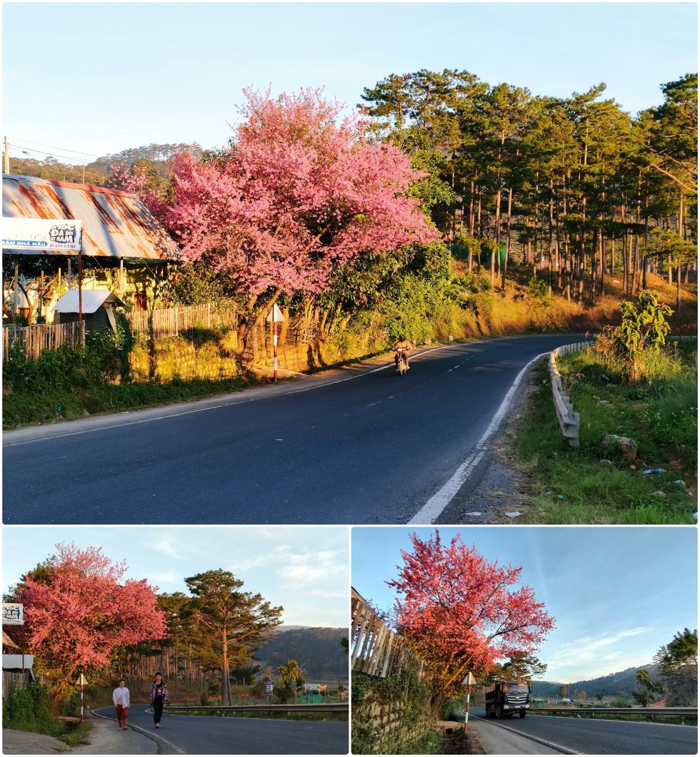 Ngôi làng rực rỡ hoa đào ở Lâm Đồng qua ống kính OPPO Reno5 - Ảnh 3.