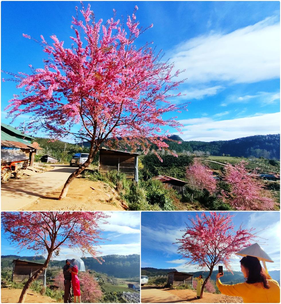 Ngôi làng rực rỡ hoa đào ở Lâm Đồng qua ống kính OPPO Reno5 - Ảnh 7.