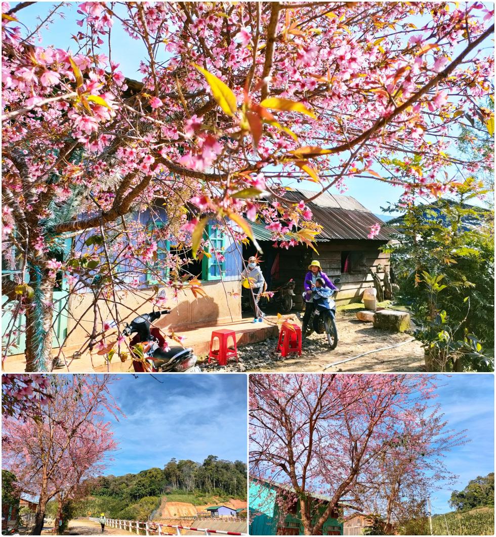 Ngôi làng rực rỡ hoa đào ở Lâm Đồng qua ống kính OPPO Reno5 - Ảnh 8.