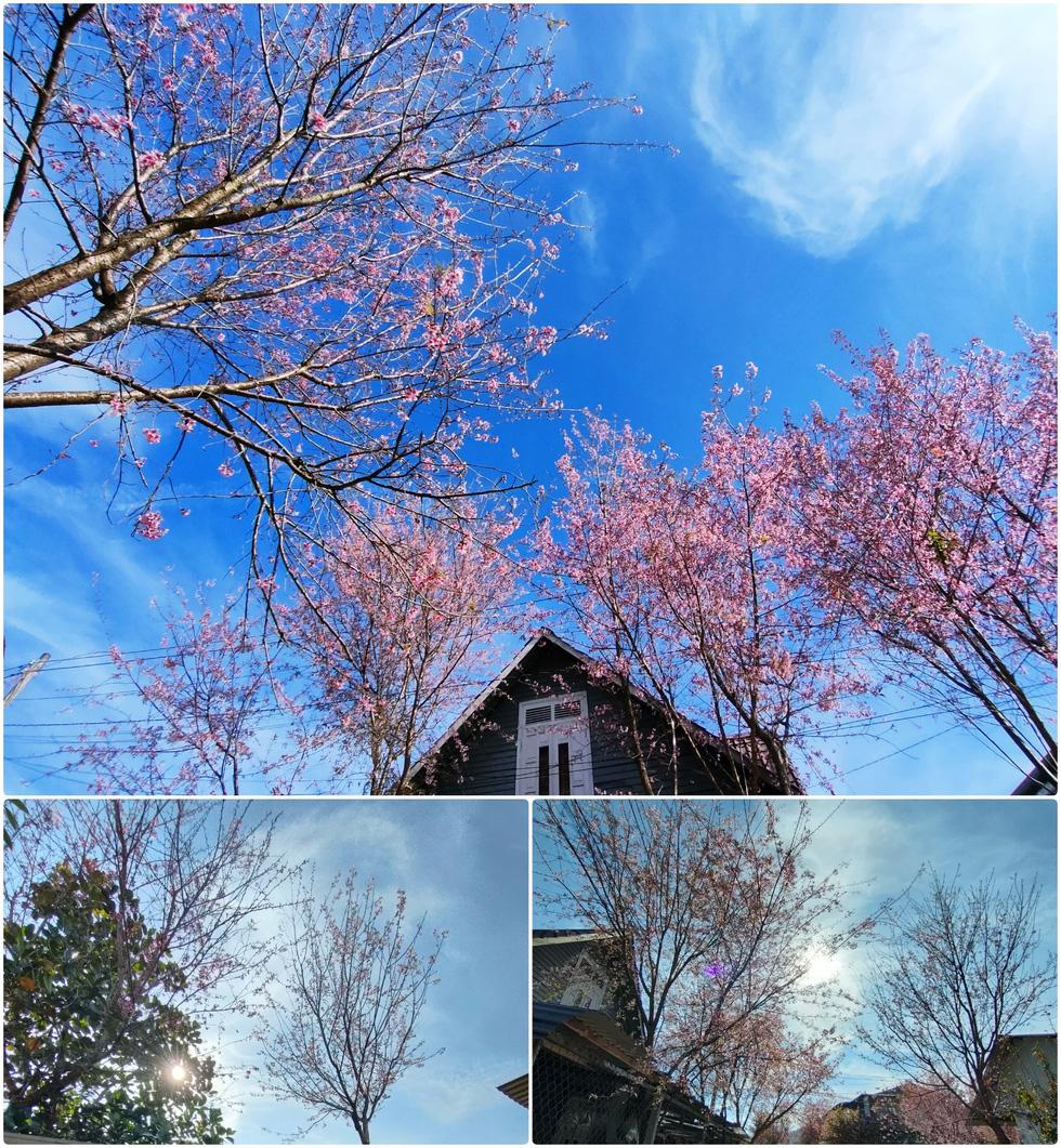Ngôi làng rực rỡ hoa đào ở Lâm Đồng qua ống kính OPPO Reno5 - Ảnh 9.