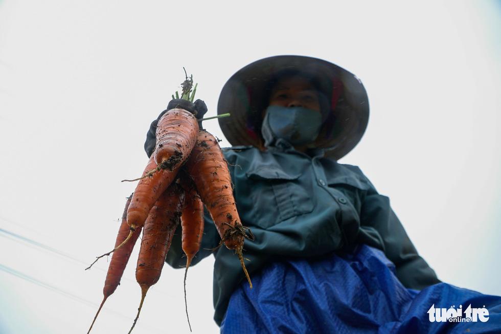 Dân Cẩm Giàng phấn khởi vì cà rốt được mùa, giá tốt bất chấp dịch COVID-19 - Ảnh 4.