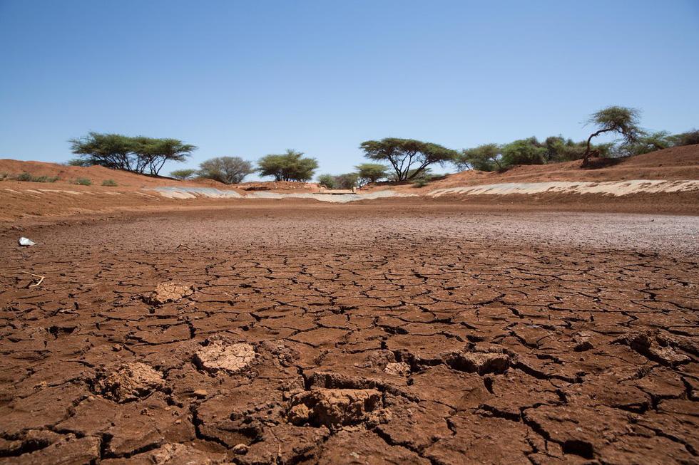Miền nam châu Phi vật lộn với hạn hán kỷ lục - Ảnh 5.