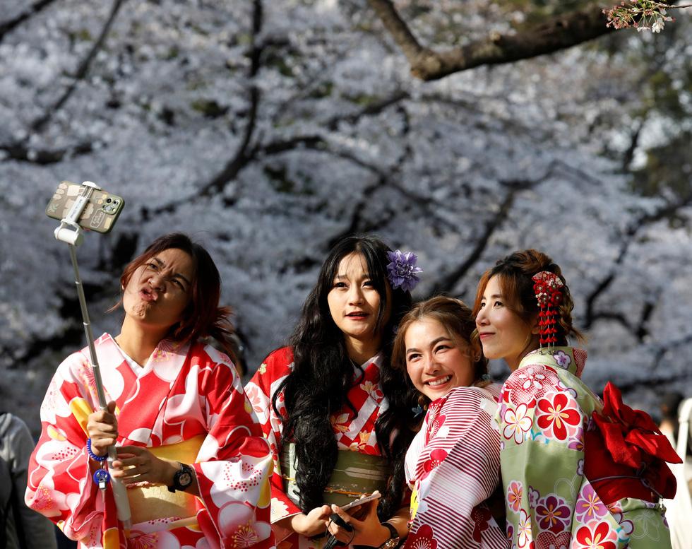 Hoa anh đào Nhật nở rộ bất thường: Vẻ đẹp tiềm ẩn hiểm họa - Ảnh 5.