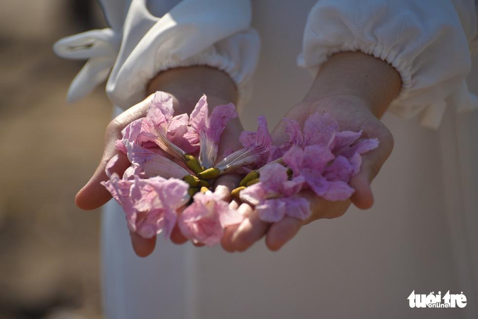 Bạn trẻ rủ nhau check-in với sắc hoa kèn hồng - Ảnh 3.