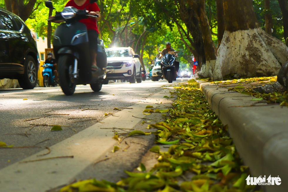 Con đường đẹp nhất Hà Nội rực vàng mùa sấu thay lá - Ảnh 9.