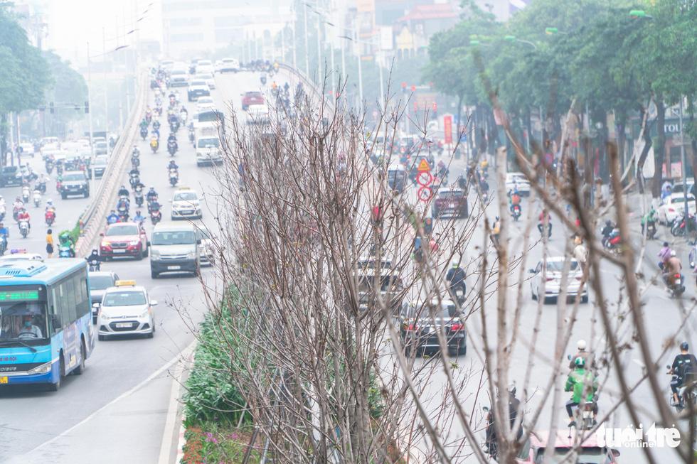 Cây phong lá đỏ ở Hà Nội không phù hợp nên chết khô là tất yếu - Ảnh 1.