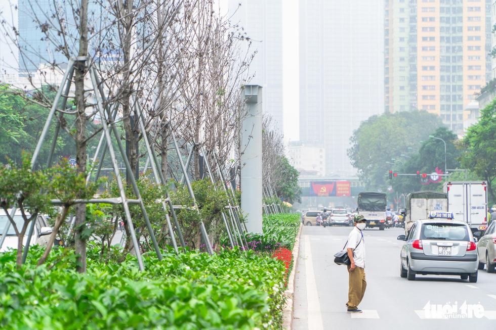 Cây phong lá đỏ ở Hà Nội không phù hợp nên chết khô là tất yếu - Ảnh 5.