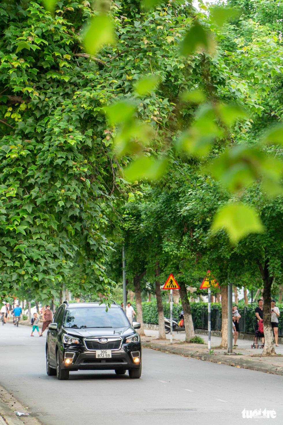 Hàng cây ở khu Ngoại giao đoàn là phong lá đỏ? - Ảnh 7.