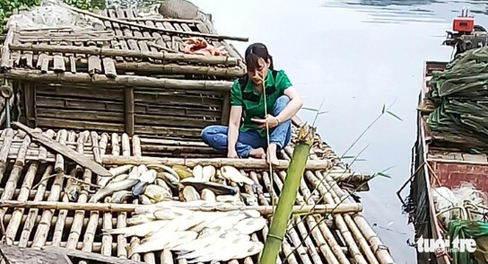 Truy tìm nguyên nhân cá sông và biển chết hàng loạt ở Thanh Hóa và Nghệ An - Ảnh 1.