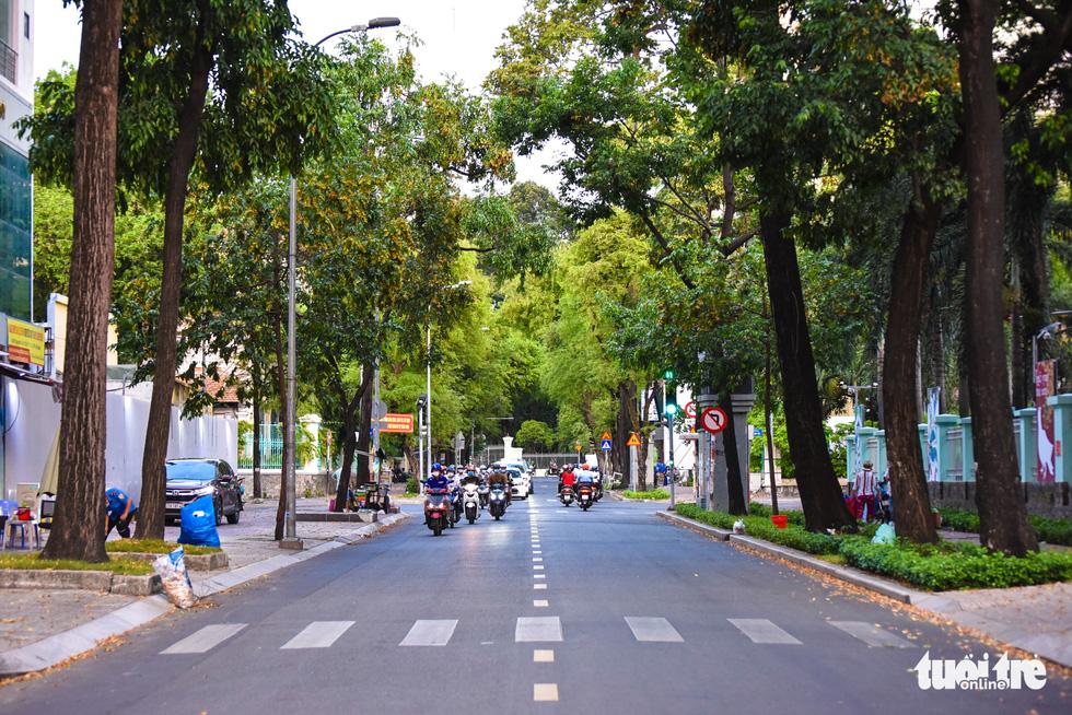 Chò nâu khoe sắc, xoay tít như chong chóng giữa Sài Gòn - Ảnh 10.
