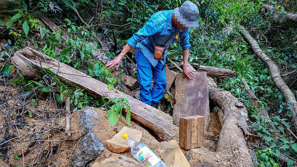 Chảy máu rừng đặc dụng Cham Chu: Tàn sát cổ thụ để lấy nu gỗ - Ảnh 3.