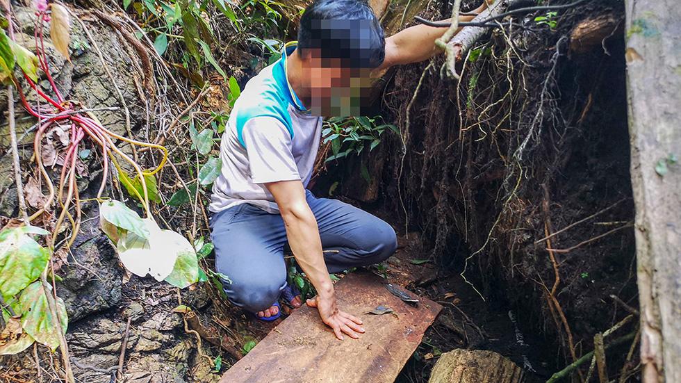 Chảy máu rừng đặc dụng Cham Chu: Tàn sát cổ thụ để lấy nu gỗ - Ảnh 6.