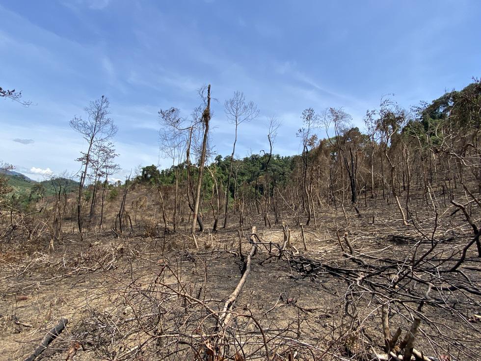 Đốt thực bì rừng phòng hộ trồng rừng thay thế gây cháy rừng? - Ảnh 4.