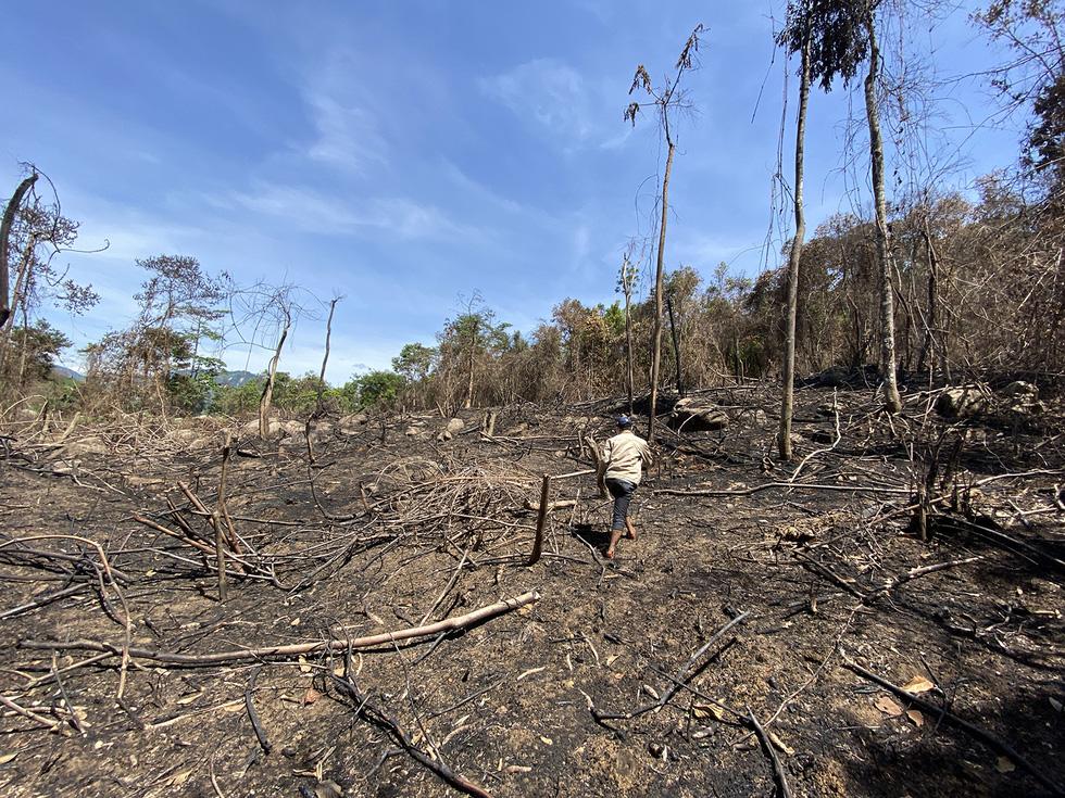 Chủ tịch Quảng Nam yêu cầu làm rõ việc đốt thực bì gây cháy cây rừng - Ảnh 4.