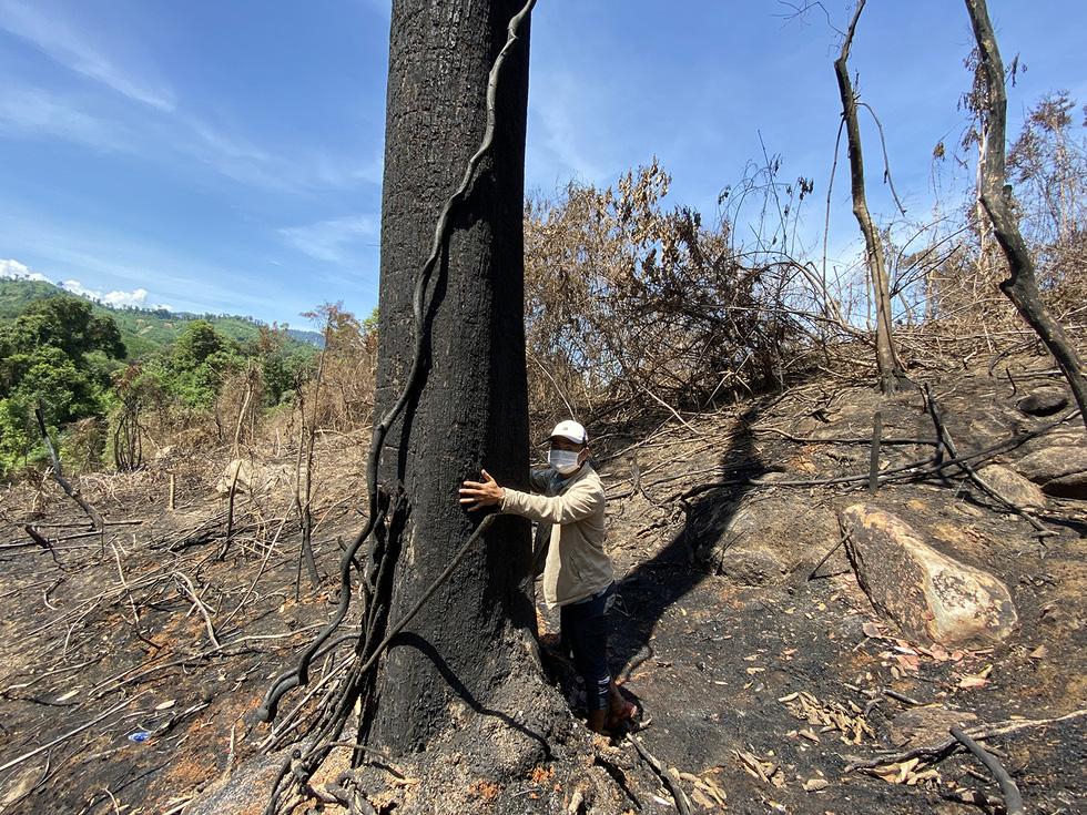Chủ tịch Quảng Nam yêu cầu làm rõ việc đốt thực bì gây cháy cây rừng - Ảnh 5.