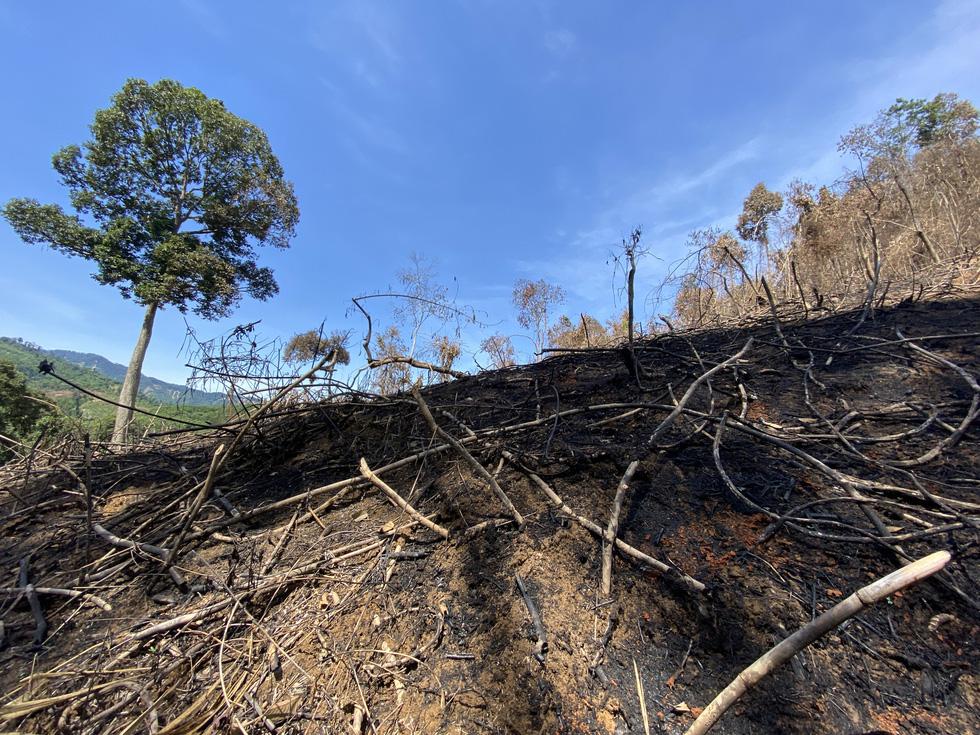 Chủ tịch Quảng Nam yêu cầu làm rõ việc đốt thực bì gây cháy cây rừng - Ảnh 6.