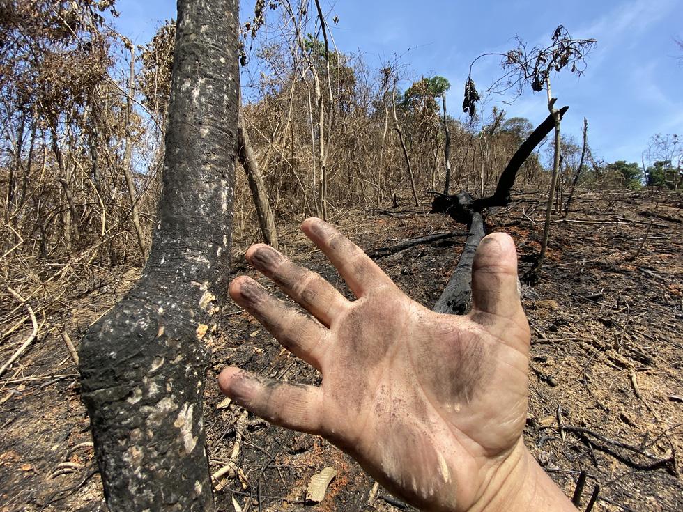 Chủ tịch Quảng Nam yêu cầu làm rõ việc đốt thực bì gây cháy cây rừng - Ảnh 1.