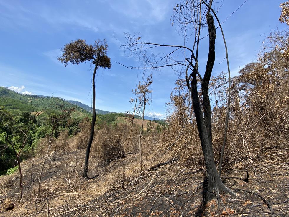 Chủ tịch Quảng Nam yêu cầu làm rõ việc đốt thực bì gây cháy cây rừng - Ảnh 7.
