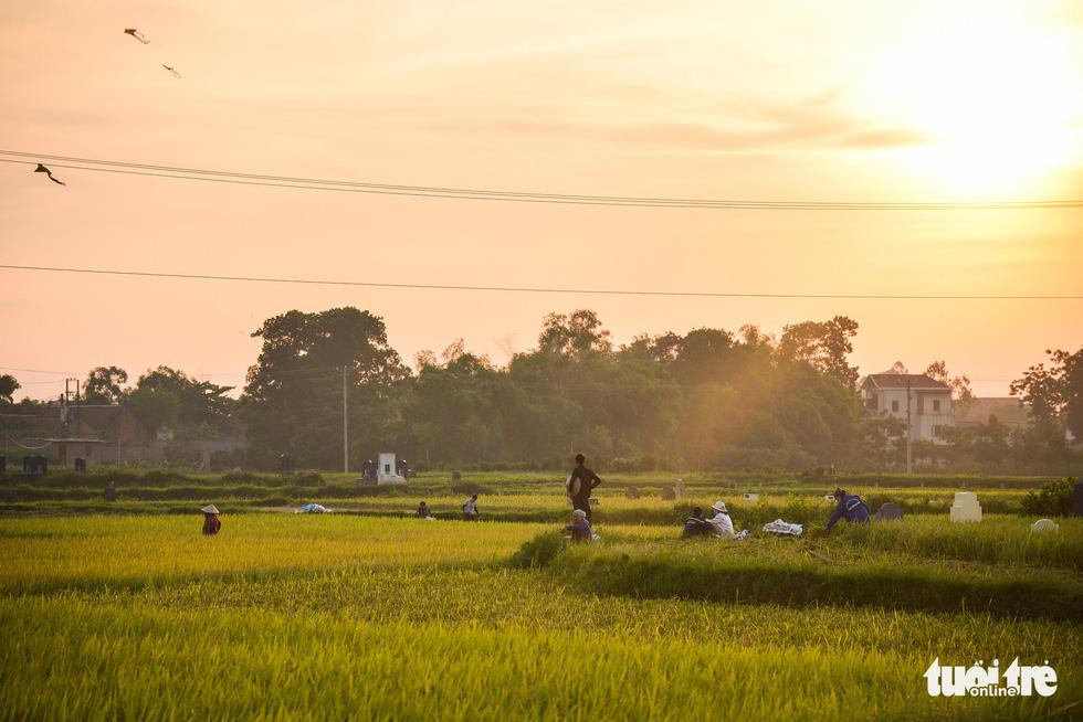 Tháng năm mùa gặt về, nông dân 'đội nắng' ra đồng thu hoạch lúa - Ảnh 9.
