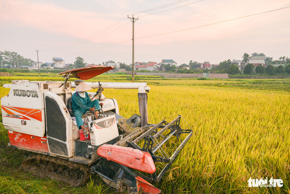 Tháng năm mùa gặt về, nông dân 'đội nắng' ra đồng thu hoạch lúa - Ảnh 4.