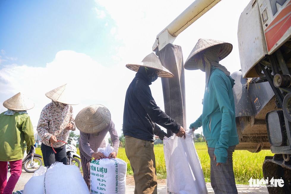 Tháng năm mùa gặt về, nông dân 'đội nắng' ra đồng thu hoạch lúa - Ảnh 7.