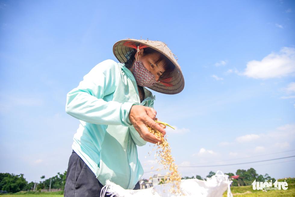 Tháng năm mùa gặt về, nông dân 'đội nắng' ra đồng thu hoạch lúa - Ảnh 8.