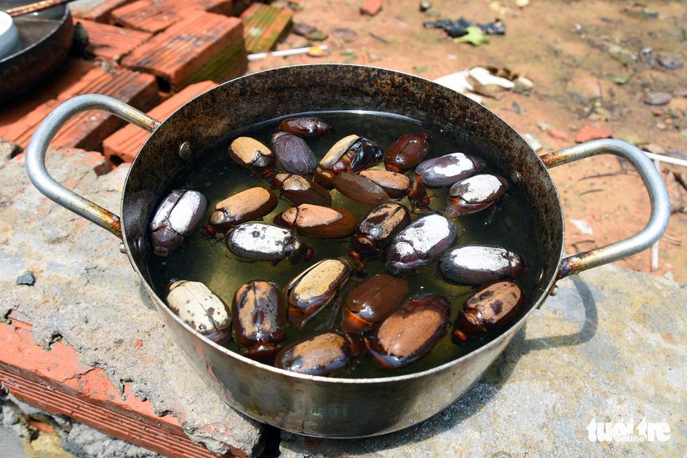 Bọ to hơn hột mít ăn trụi vườn cây ăn trái tại Bình Phước - Ảnh 10.