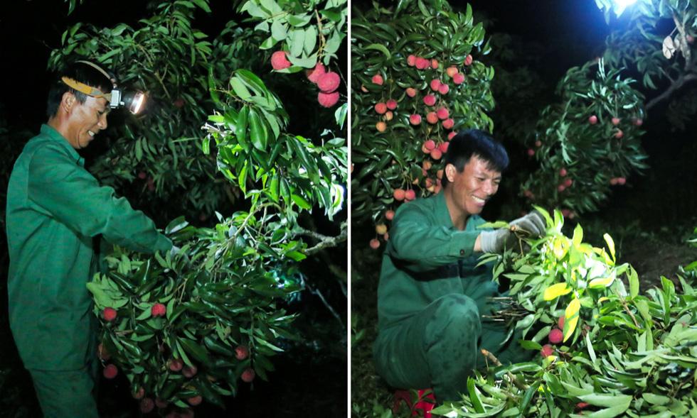 Hành trình vượt tâm dịch của vải thiều Bắc Giang - Ảnh 2.