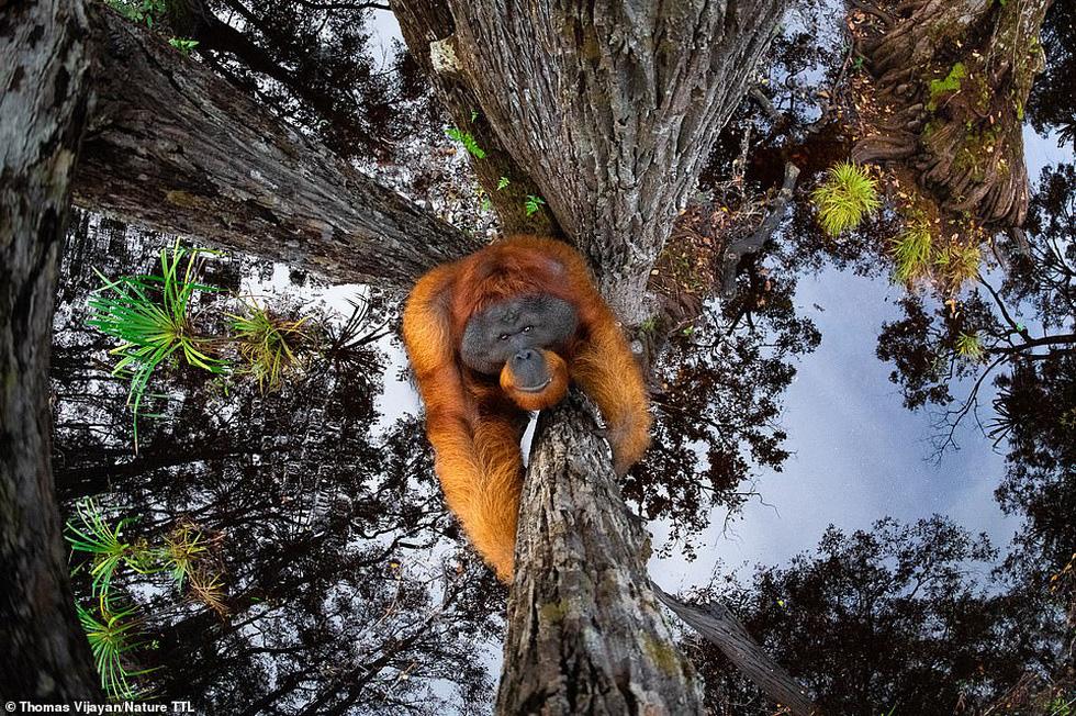 Thiên nhiên hùng vĩ, mơ màng và quyến rũ qua giải ảnh Nature TTL năm 2021 - Ảnh 1.