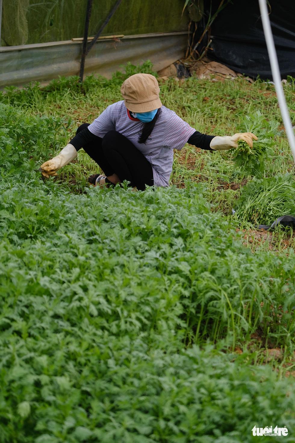 Người Đà Lạt hào phóng, tặng Sài Gòn nguyên vườn rau - Ảnh 11.