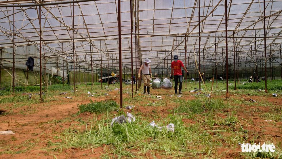 Người Đà Lạt hào phóng, tặng Sài Gòn nguyên vườn rau - Ảnh 6.