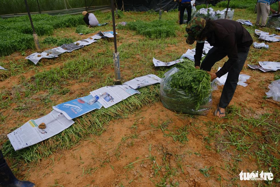 Người Đà Lạt hào phóng, tặng Sài Gòn nguyên vườn rau - Ảnh 10.