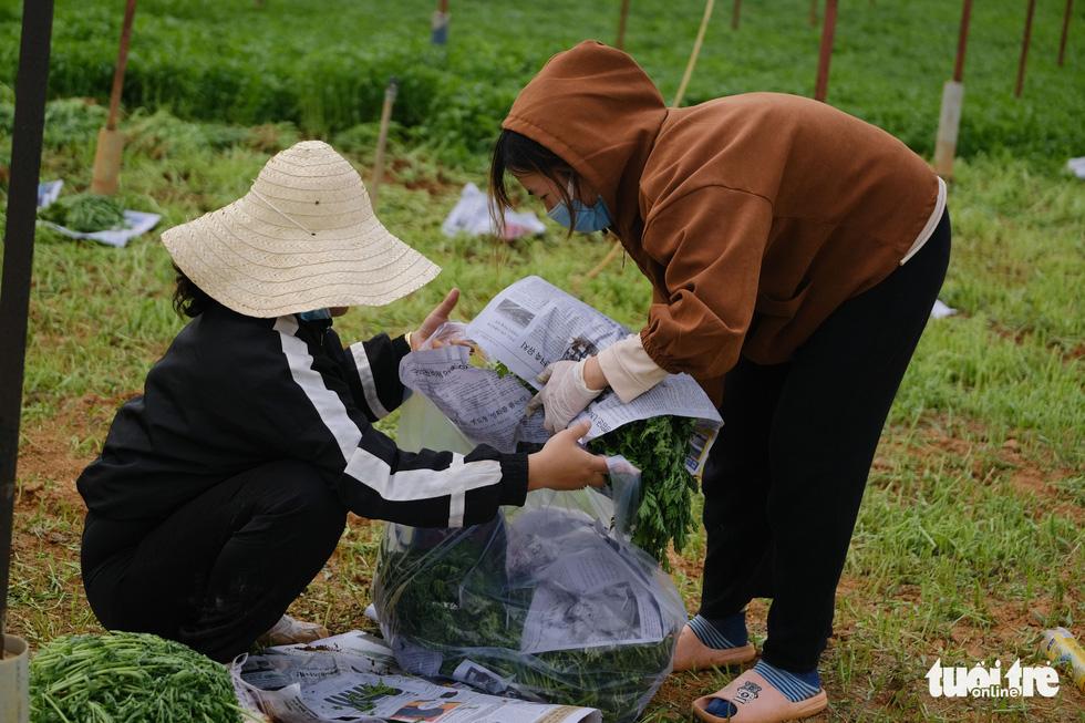 Người Đà Lạt hào phóng, tặng Sài Gòn nguyên vườn rau - Ảnh 2.