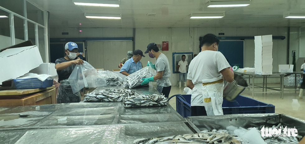 Người Đà Nẵng gửi 7 tấn cá tươi tiếp sức Sài Gòn chống dịch - Ảnh 3.