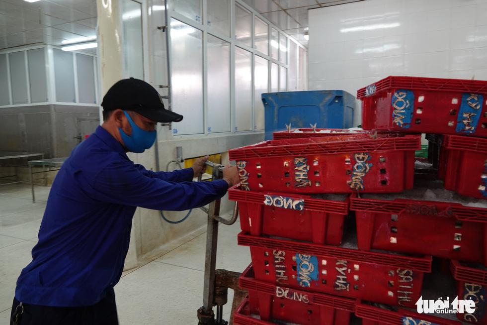 Người Đà Nẵng gửi 7 tấn cá tươi tiếp sức Sài Gòn chống dịch - Ảnh 2.