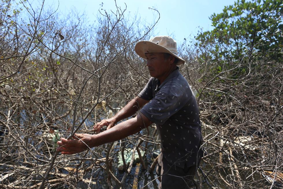 Nhiều diện tích rừng ngập mặn chết không rõ nguyên nhân - Ảnh 6.