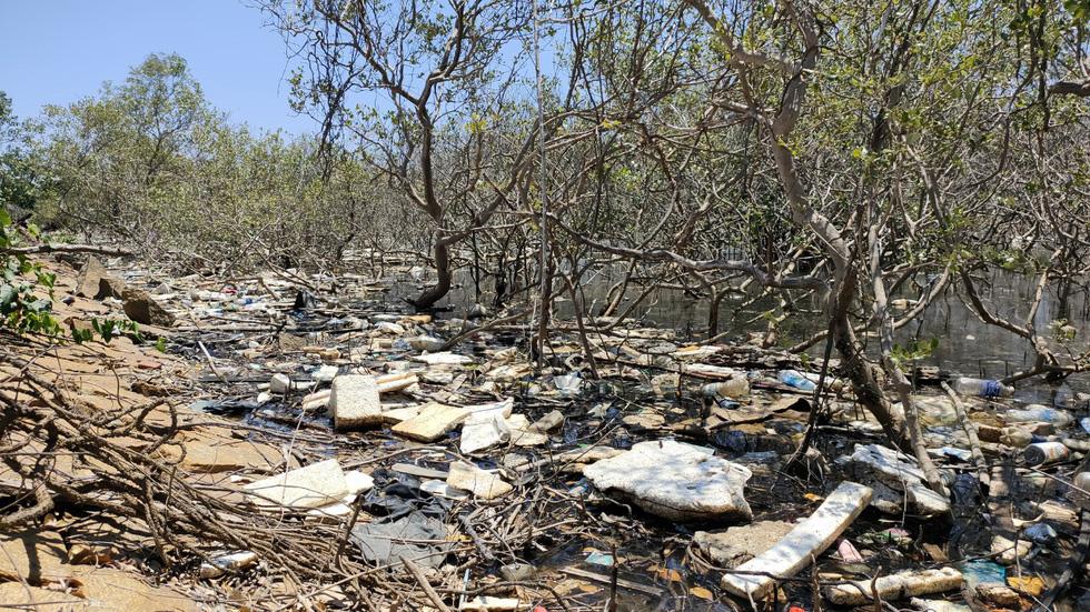 Nhiều diện tích rừng ngập mặn chết không rõ nguyên nhân - Ảnh 5.