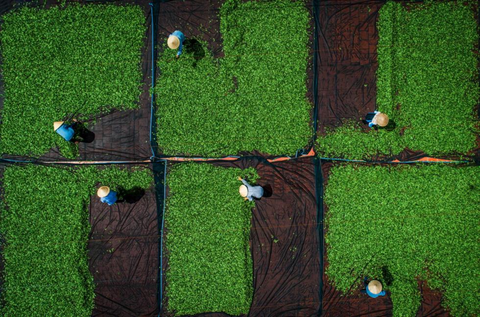 Ngắm bộ ảnh Việt Nam nhìn từ trên cao đạt bằng Danh dự cuộc thi ảnh thường niên FIAP - Ảnh 3.