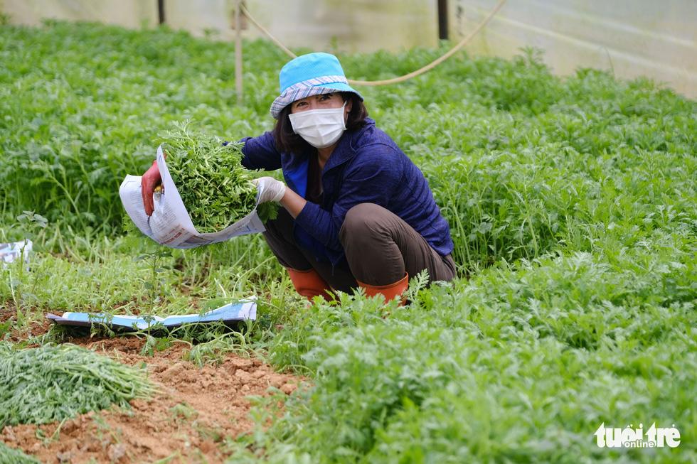 Lâm Đồng hào phóng, tặng rau nguyên vườn, chở rau bằng xe giường nằm máy lạnh đến TP.HCM - Ảnh 9.