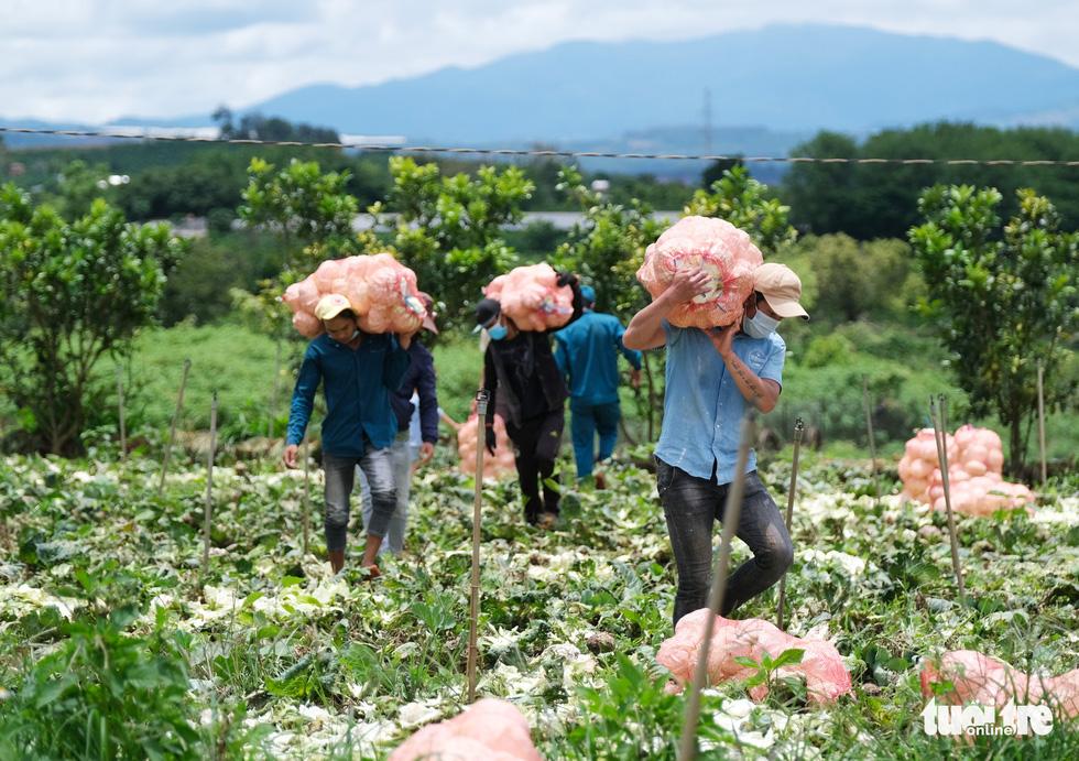 Lâm Đồng hào phóng, tặng rau nguyên vườn, chở rau bằng xe giường nằm máy lạnh đến TP.HCM - Ảnh 2.