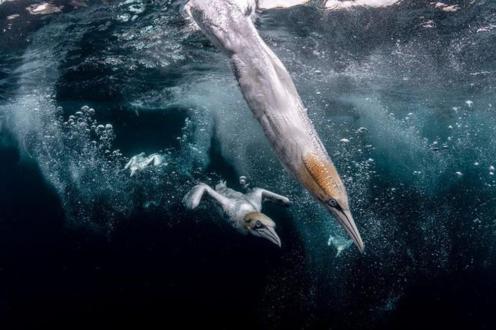Ngắm biển xanh sâu thẳm và rực rỡ qua giải thưởng Nhiếp ảnh đại dương - Ảnh 2.
