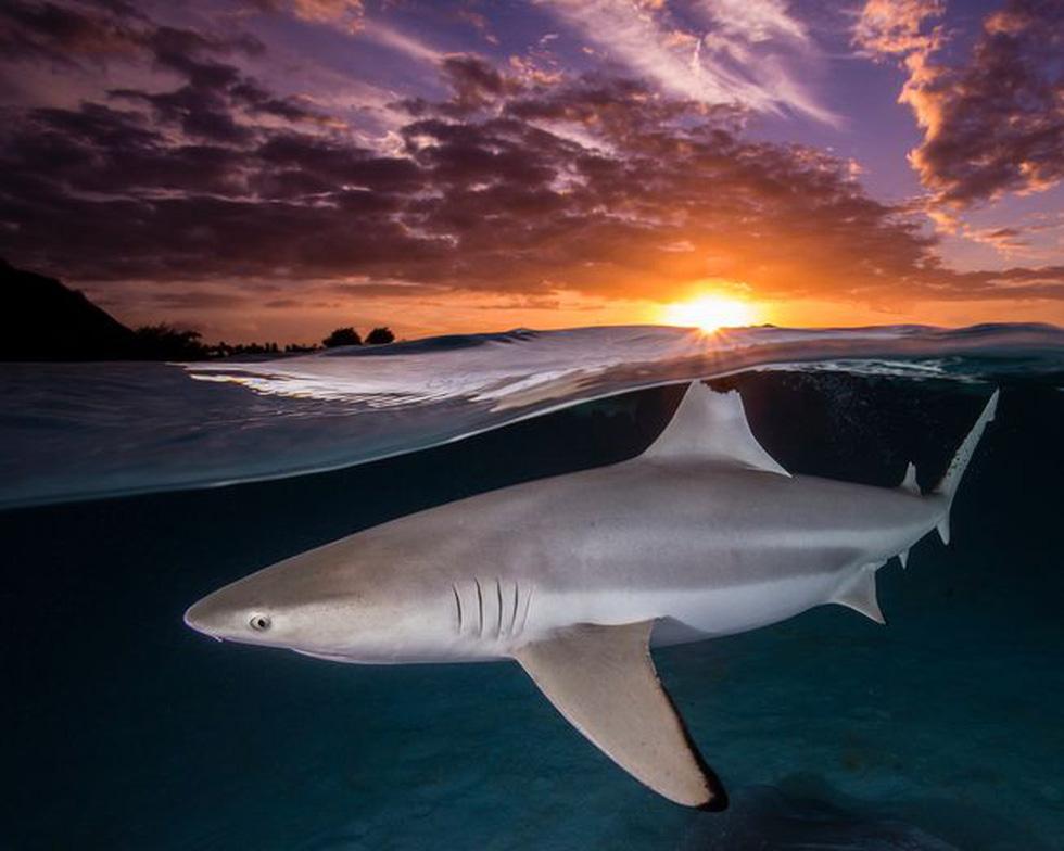 Ngắm biển xanh sâu thẳm và rực rỡ qua giải thưởng Nhiếp ảnh đại dương - Ảnh 3.