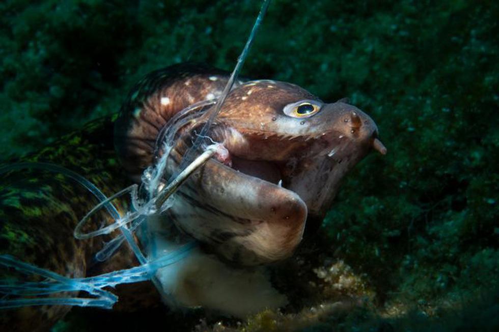 Ngắm biển xanh sâu thẳm và rực rỡ qua giải thưởng Nhiếp ảnh đại dương - Ảnh 6.