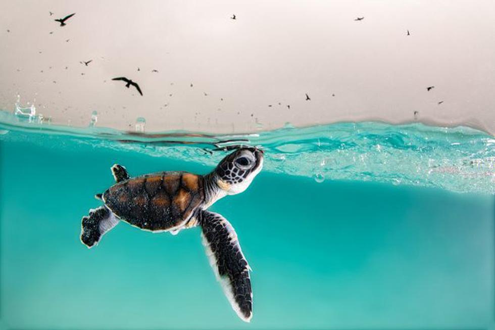 Ngắm biển xanh sâu thẳm và rực rỡ qua giải thưởng Nhiếp ảnh đại dương - Ảnh 8.